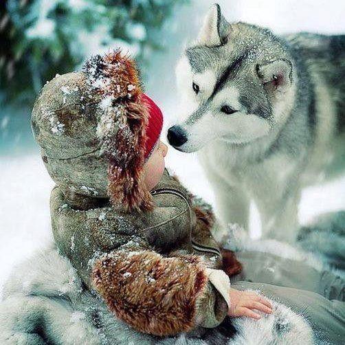le loup et l'enfant