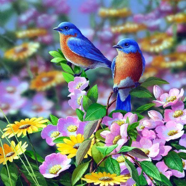 Oiseaux for Les petits oiseaux